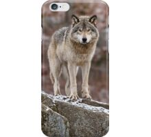 Timber Wolf on Rocks iPhone Case/Skin