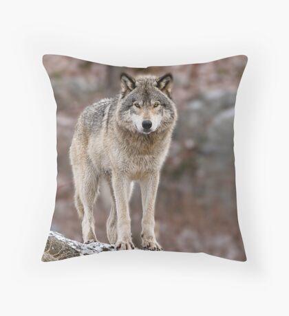 Timber Wolf on Rocks Throw Pillow