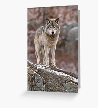 Timber Wolf on Rocks Greeting Card