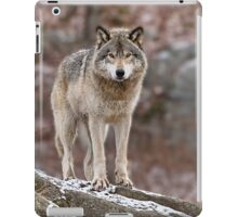Timber Wolf on Rocks iPad Case/Skin