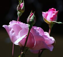 For You ............ Roses by saseoche