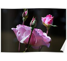 For You ............ Roses Poster