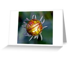 Abstact Of Nature Greeting Card