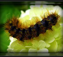 Caterpillar On a snowball tree by Angie O'Connor