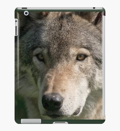 Timberwolf - Acrylic painting treatment in PS3 iPad Case/Skin