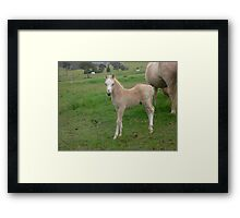 monarch lodge shakespeare as foal Framed Print