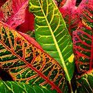 Beautiful Leaves on the Sunshine Coast, Australia by Angela Gannicott