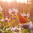 Sunset at the Butterfly Garden by David Lamb