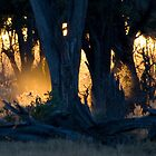 Early morning, Moremi Game Reserve, Botswana by Neville Jones