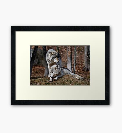 Alpha Pair Framed Print