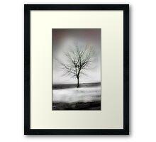 winter shore Framed Print