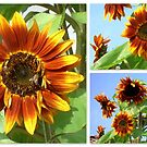 Sunflower Collection by ©The Creative  Minds