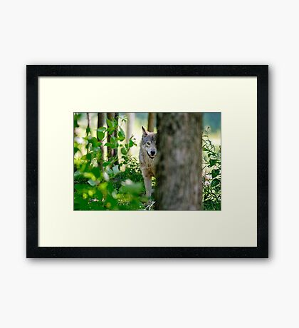 Timberwolf Framed Print