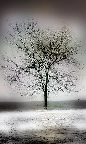 winter shore too by brian gregory