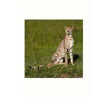 Cheetah, Masai Mara, Kenya Art Print