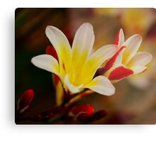 Highlights of Red Metal Print