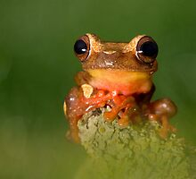 The Clown frog by AngiNelson