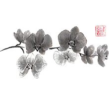 Curious orchid sumi-e painting  by Maryna Sokolyan
