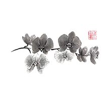 Curious orchid sumi-e painting  Photographic Print