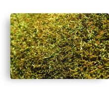 Dry Moss Canvas Print
