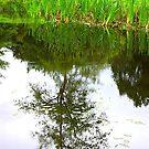 Tree Reflections by Trevor Kersley
