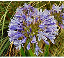 EXOTIC FLOWER. Photographic Print