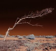 Old and Bent, Carnarvon, WA by BigAndRed