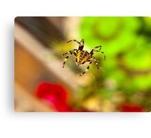Spider Close-up Canvas Print
