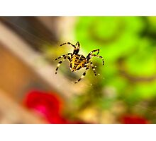 Spider Close-up Photographic Print