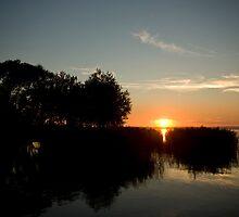 Sunset through the reeds by Béla Török