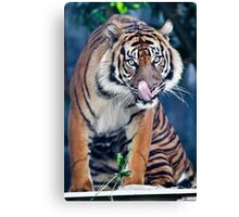 Hungry - licking lips Canvas Print