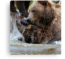 Bear games Canvas Print