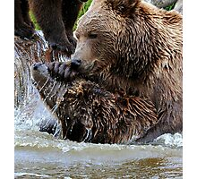 Bear games Photographic Print