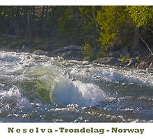 Water powers - Nesselva . Norway. Brown Sugar Story.Featured in Group Fishlike . Favorites: 1 Views: 324 . Thx! by AndGoszcz