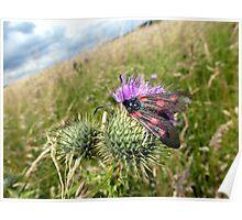 6-Spot Burnet Moth? Poster