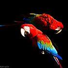 Red Macaw by Sérgio Grilo