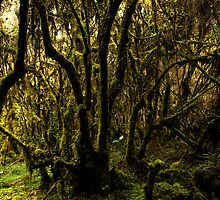 Cloud Forest by Walter Quirtmair