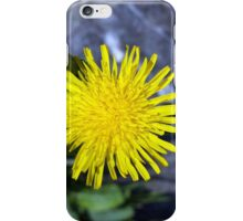 yellow flower near a rock iPhone Case/Skin