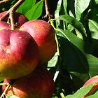September peaches by Maria1606