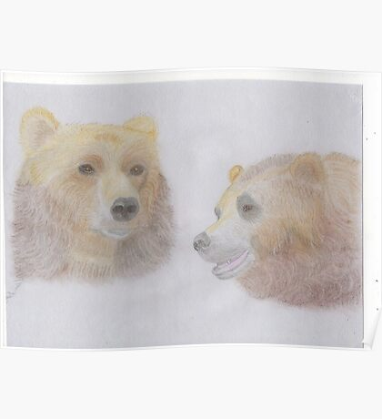 A pair of Bears Poster