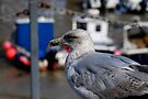 Seagull at Folkestone Harbour, Kent by buttonpresser