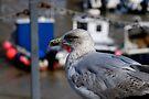 Seagull at Folkestone Harbour, Kent by David Carton