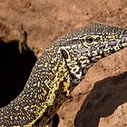 Nile Water Monitor Close Up by Michael  Moss