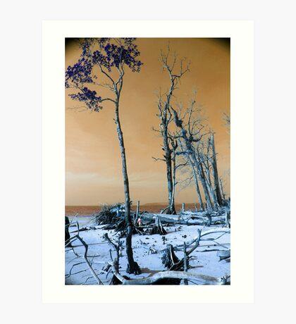 Dried trees Art Print