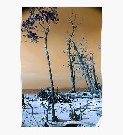 Dried trees Poster