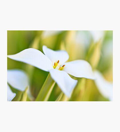 White Flower Macro Photographic Print