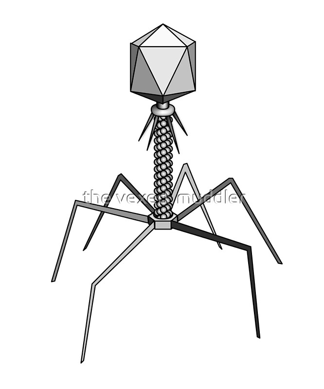 Quot T4 Bacteriophage Virus Quot Art Prints By The Vexed Muddler