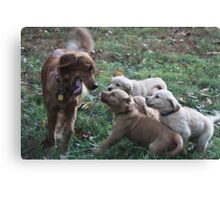 Mothers Joy Playing With Her Pups- 10 Canvas Print