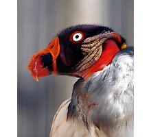 The Ugly Buzzard Photographic Print