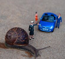 Stop: Snail Crossing by Mark Wilson